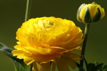 Blumen I